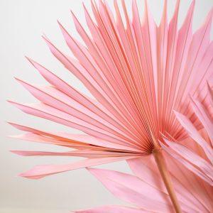 palmblätter rosa