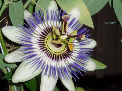blume_diverse Blumen Hoenekop Herbern