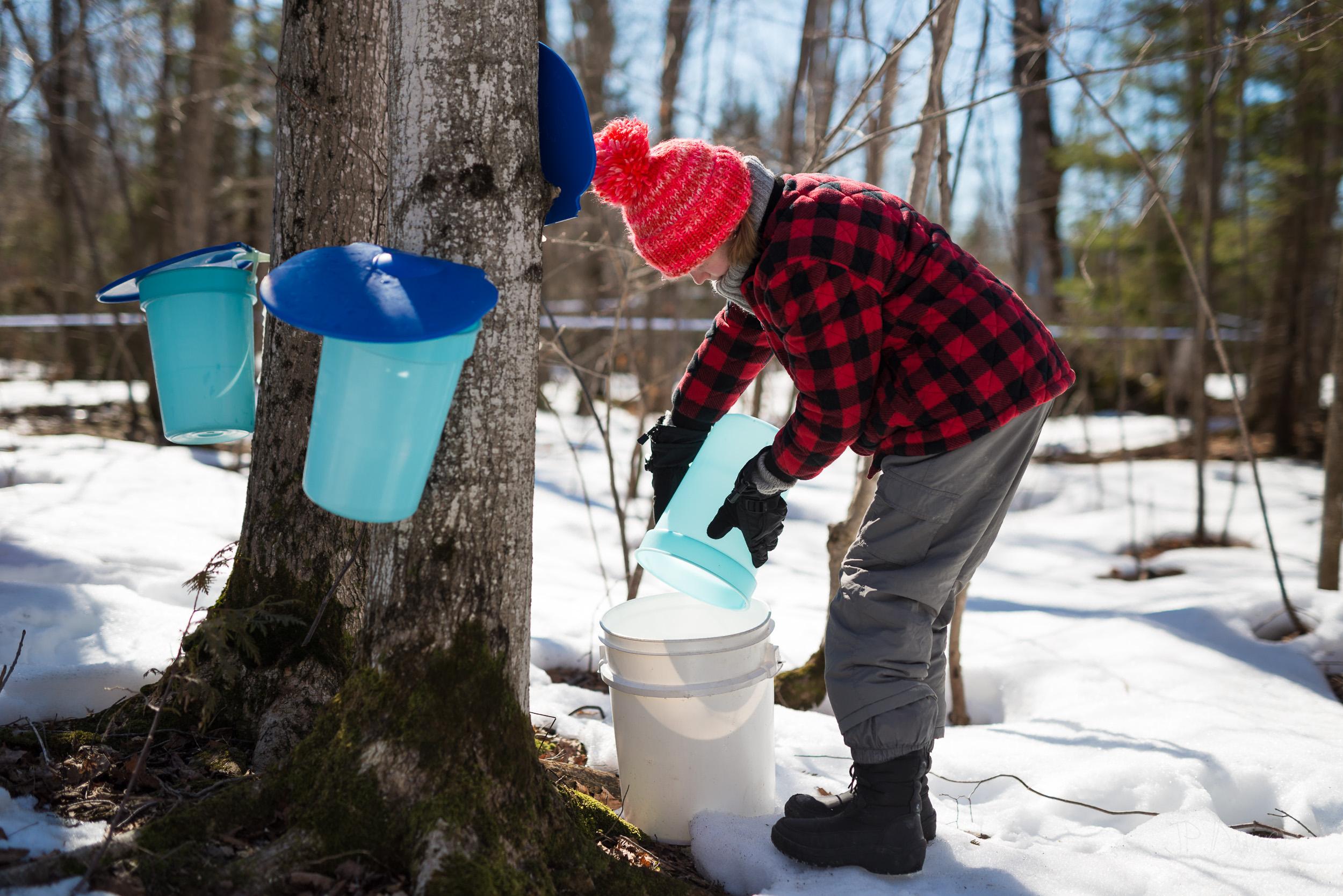 447965b2417 Spring Maple Syrup Making at a Family Maple Sugar Bush - blurMEDIA ...