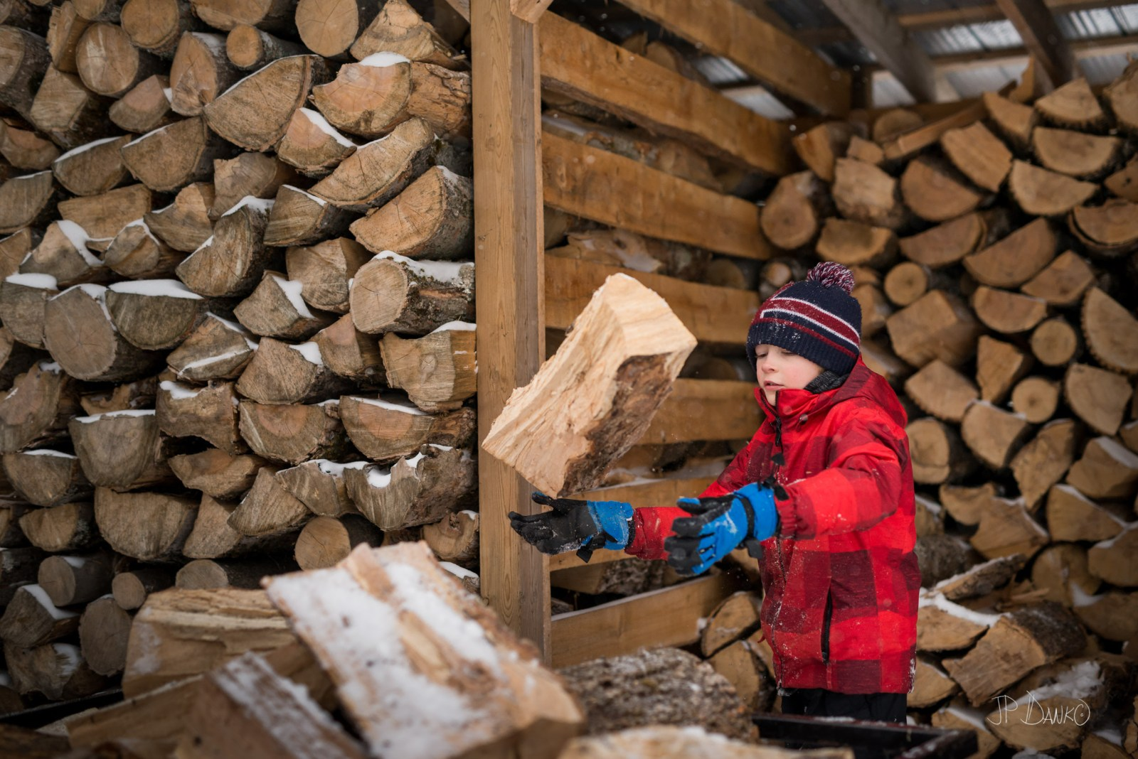 Boy in red winter jacket tosses firewood from wood shed onto pile of firewood
