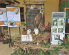 Bird Watching at Philippine Eagle Center | Blushing Geek