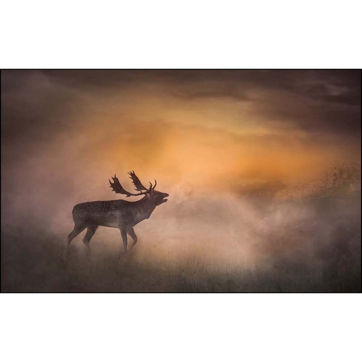 Deer-In-Morning-Mist-2