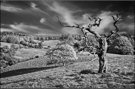 Above Oakamoor - David Slade