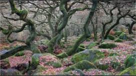 Dancing-Trees-IreneStupples