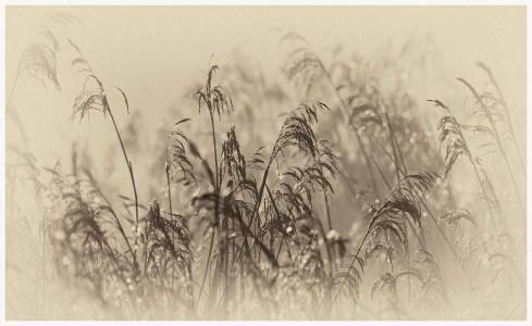 Early-morning-RichardBryant