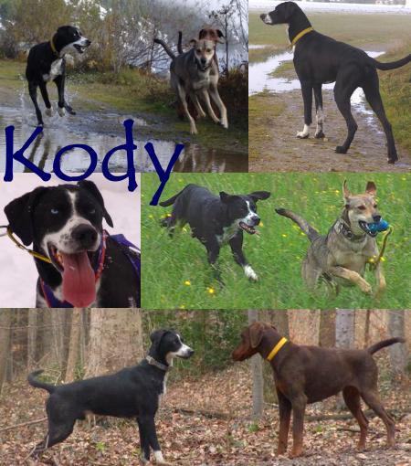 Kody collage