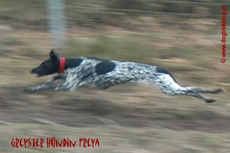 © www.laufhundesport.at.tf/
