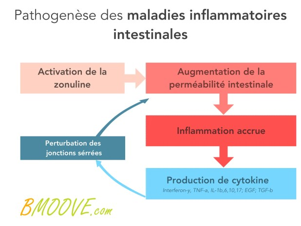 Perméabilité intestinale et hyperperméabilité intestinale 13