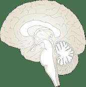 gingembre et fonctions cérébrales