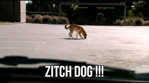 zitch-dog