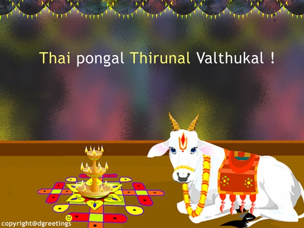 Happy pongal hd wallpapers images fb pics whatsapp dp free download happy pongal hd wallpapers images fb pics whatsapp dp free download m4hsunfo