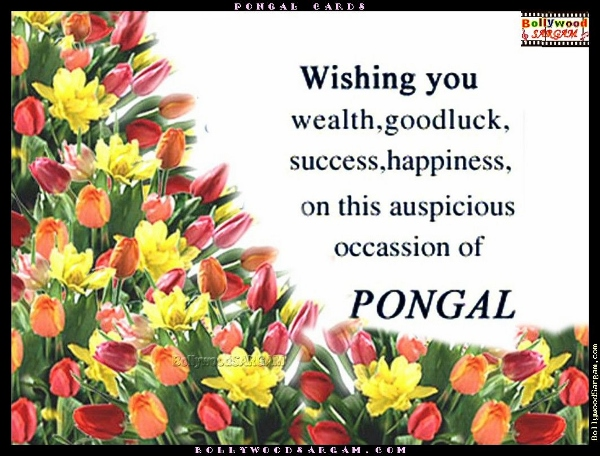 Happy pongal greetings 2015 to wish your loved ones bms happy pongal wallpapers 9 m4hsunfo