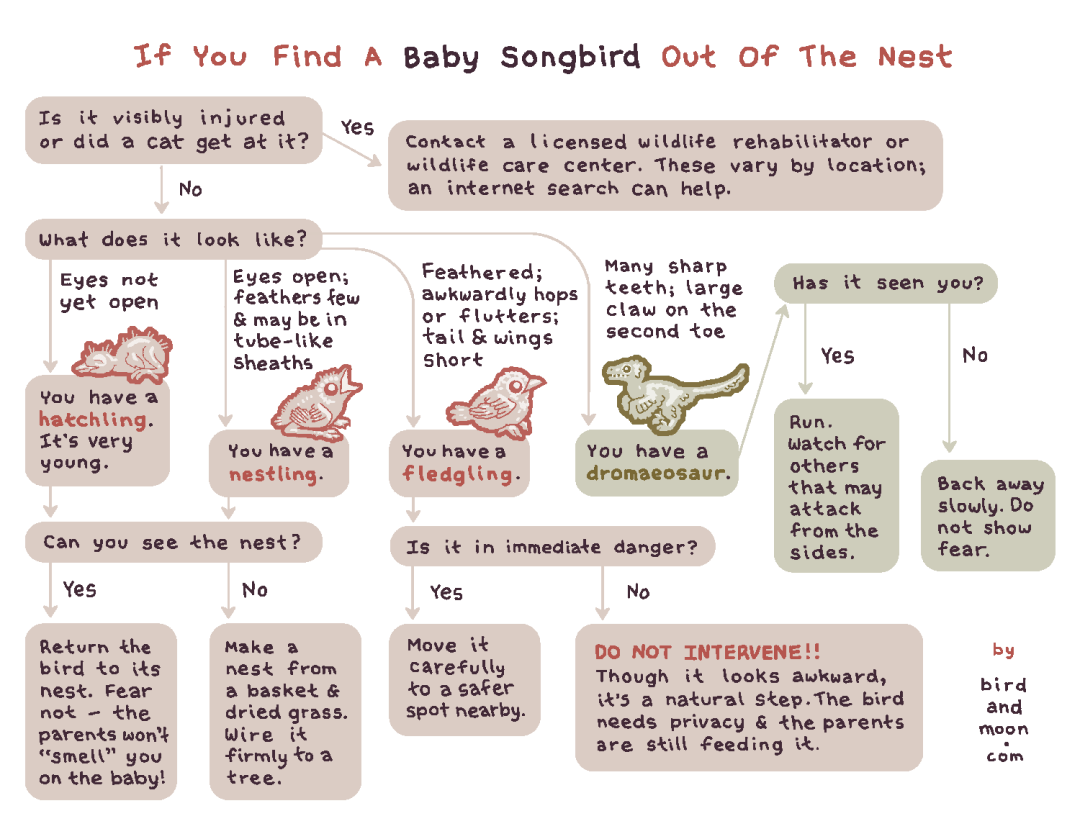 If You Find a Baby Songbird Out of the Nest