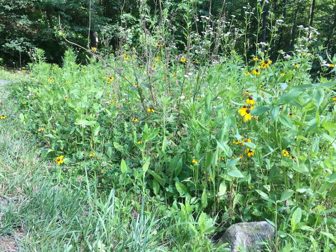 Wildflower Plot