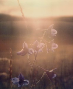 mongolian-flower-ii