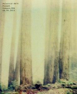 oregon-forest
