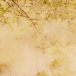 trees-v