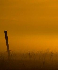 yellow-sunrise