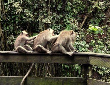 Ubud Sacred Monkey Forest