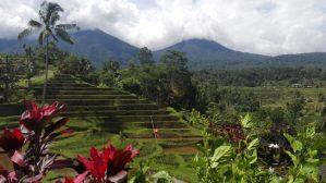 Jatiluwih Rice Fields, Bali