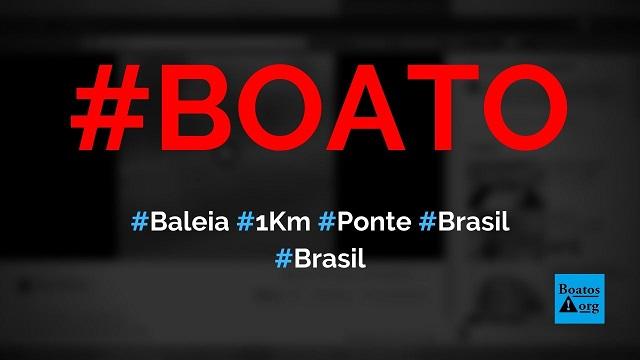 Baleia de quase 1 km passa por baixo da ponte junto a filhote em cidade do Brasil, diz boato (Foto: Reprodução/Facebook)