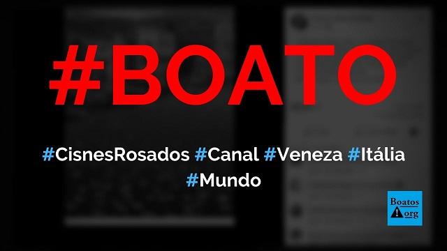 Foto mostra cisnes rosados chegando no canal de Veneza, na Itália, diz boato (Foto: Reprodução/Facebook)