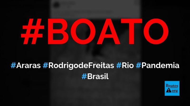 Araras são filmadas na Lagoa Rodrigo de Freitas, no Rio de Janeiro, durante pandemia, diz boato (Foto: Reprodução/Facebook)