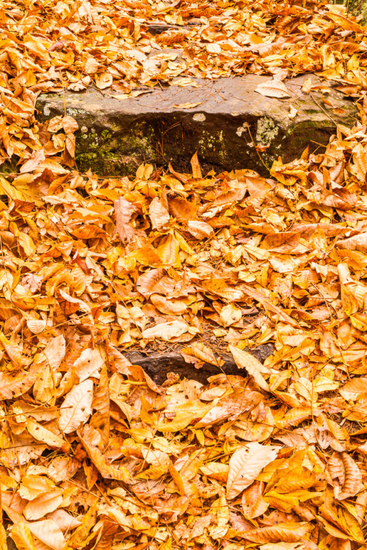 10226. Autumn leaves, Arkansas