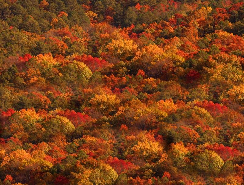 10006. Autumn foliage, Ouachita National Forest, Arkansas