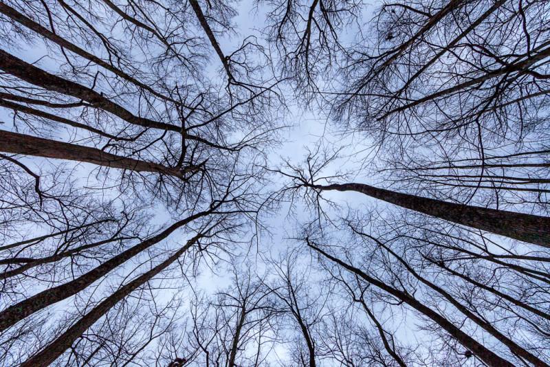 Trees against the sky, Lorance Creek Natural Area, Arkansas