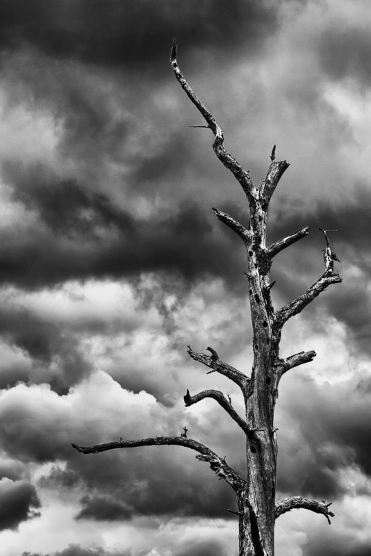 10497. Tree and clouds, Arkansas