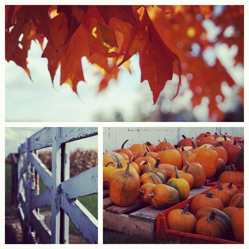 Fall collage with pumpkins and maple leaves