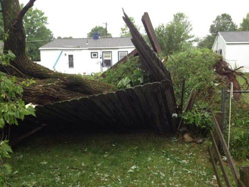 storm took out my fence and Bob's tree...