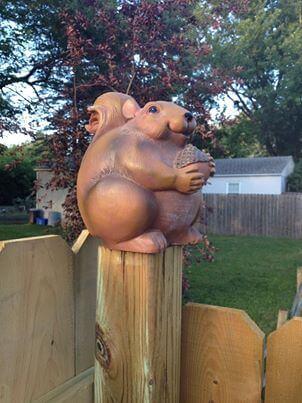 Buddah Bob the Squirrel