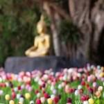 慈誠羅珠堪布:佛教徒的生活糢式