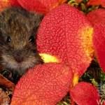 【五明佛學院】一位師父和一只老鼠的故事