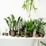 5 façons de mettre vos plantes en valeur