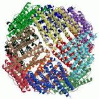 Catena proteica