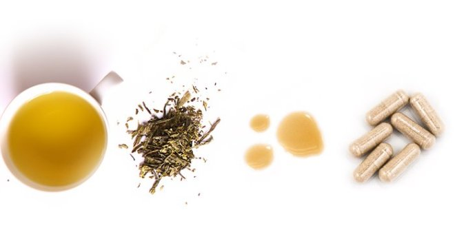 Your Expert Guide to Green Tea