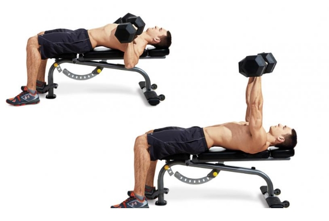 Chest And Back Exercises