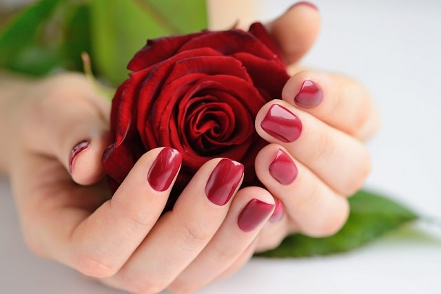 hands of a woman with dark red manicure with red r PJQHB9W scaled min 1
