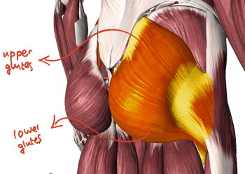 upper_and_lower_glute_fin_text