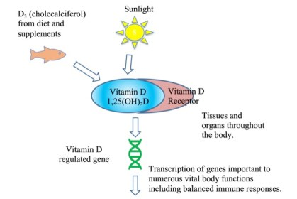 Sunlight to Vit D