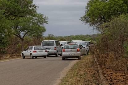 Traffic Jam im Kruger NP (was es hier wohl zu sehen gibt?)