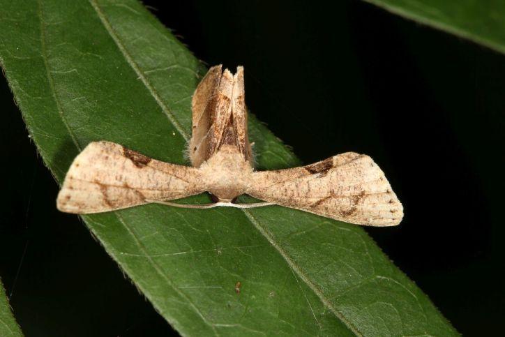 Schmetterlinge / Butterflies / Lepidoptera