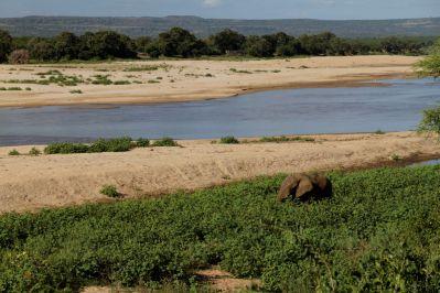 Blick vom Camp auf Letaba River: Afrikanischer Elefant