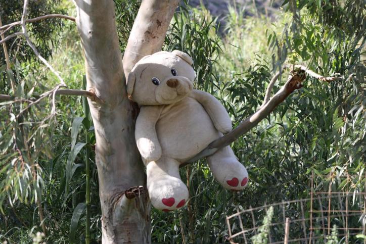 Bären / Bears / Ursidae