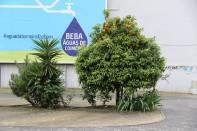 Orangenbaum / Orange tree / Citrus × sinensis