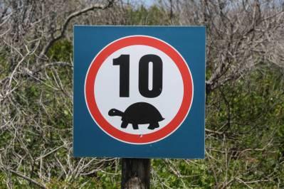 Höchstgeschwindigkeit für Schildkröten?