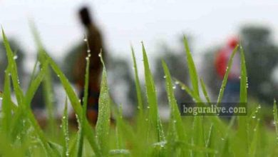 Photo of কবিতা: হেমন্তের পরশে – ইউনুছ ইবনে জয়নাল